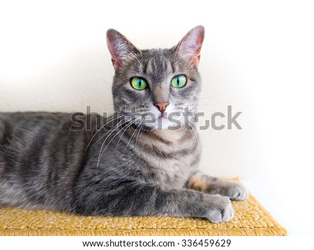 A sweet gray striped tabby cat with big green eyes looks at camera