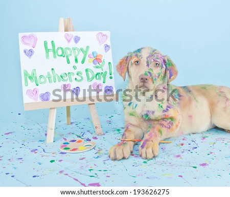 A sweet little Lab puppy that looks like he just made a mess painting a picture for Mom. - stock photo