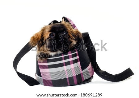 A sweet puppy in transportation bag. Taken on a white background