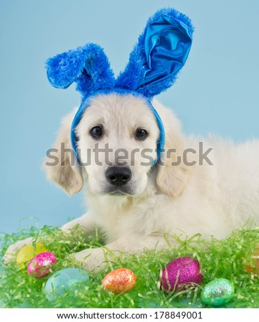 A sweet puppy wearing blue bunny ears with Easter eggs around him, on a blue background.