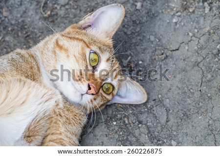 A tabby cat staring at the camera Intensely - stock photo