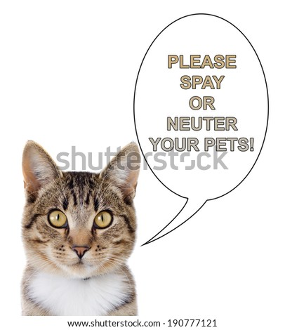 A tabby cat with a speech bubble saying, please spay or neuter your pets.  Isolated on a white background. - stock photo