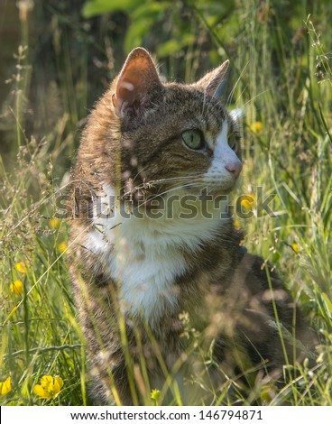 A tabby cat with white chest looking right in long summer grass - stock photo