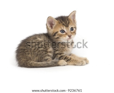 A tabby kitten lays down for a nap on a white background - stock photo