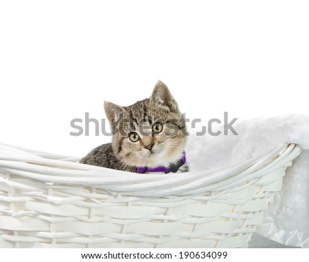 A tabby kitten sitting in a basket, isolated against a white background. - stock photo