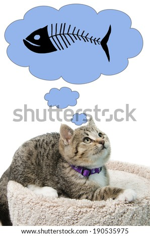 A tabby kitten thinking about some fish, isolated on a white background. - stock photo