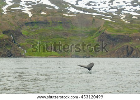 A tail of a whale, near Husavik, northeast Iceland - stock photo