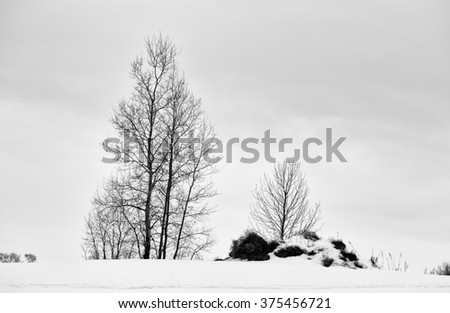 A tall here poplar tree in a snow covered rural black and white winter landscape - stock photo
