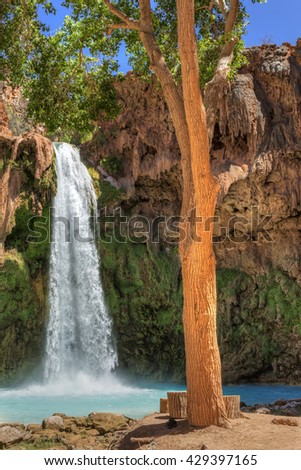 A tall tree provides shade on a sunny day at Havasu Falls on the Havasupai Indian Reservation in the Grand Canyon. - stock photo