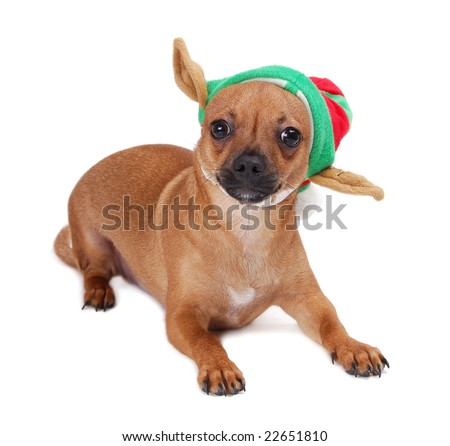 A tan chihuahua wearing a funny hat.