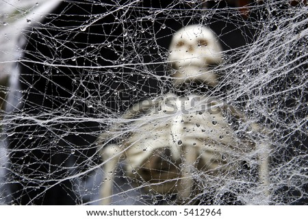 tangled wet decorative spider web human stock photo 5412964, Skeleton
