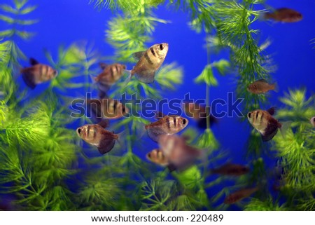 A tankful of fish... - stock photo