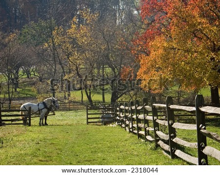 A team of two horses in a field of  the historic Longstreet Farm in Holmdel New Jersey. - stock photo
