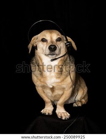a telephone dog - stock photo
