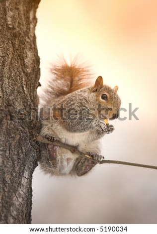 A telephoto of a squirrel late afternoon in wintertime (in Central Park, Manhattan)
