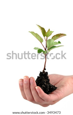 A tender seedling in front of white background