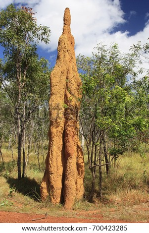 A Termite Mound in the tip of  Cape York Australia