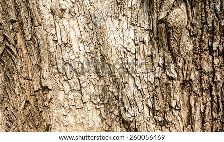 A texture and backgrounds of the old bark in the forest with brown color