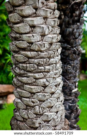 A texture of a palm tree. - stock photo