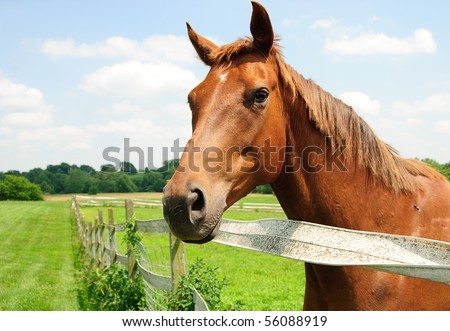 A thoroughbred horse on farm side view - stock photo