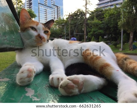 A three-color cat on the green bench in the park.
