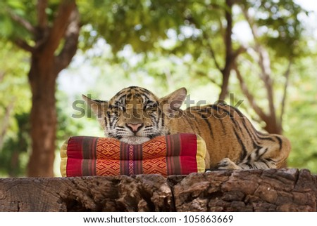 A tiger falls asleep resting its head on a pillow - stock photo