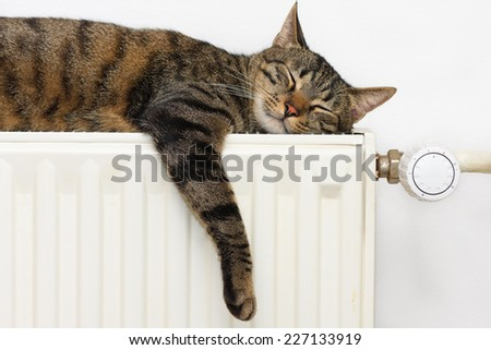 A tiger (tabby) cat relaxing on a warm radiator  - stock photo