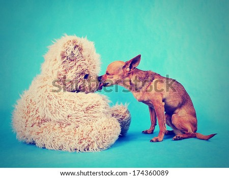 a tiny chihuahua kissing a teddy bear done with a vintage retro instagram filter - stock photo