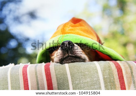 a tiny chihuahua lying on a pet bed with a hoodie on