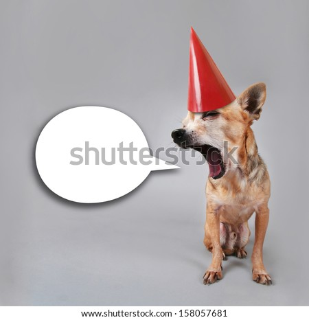 a tiny chihuahua talking with a party hat on - stock photo