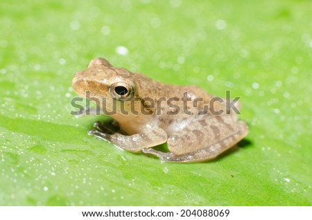 a tiny frog is perched on a leaf.