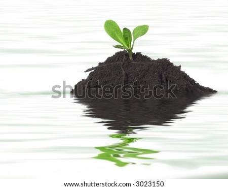A tiny seedling emerging from an island soil, which in itself is emerging from life giving water showing the idea of growth, success, new life and the continuation of the cycle of life