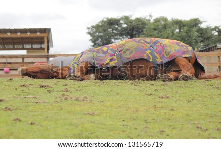 A tired horse lays on the ground/Tired Horse/A tired horse lays on the ground - stock photo