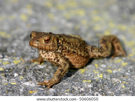 A toad walking over a gravel road - stock photo