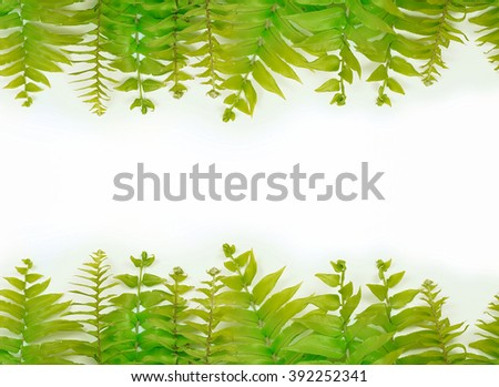A top and bottom border of two varieties of green garden ferns on a white background for Earth Day on April 22. Concept of conservation and ecology. Horizontal image with Copy space. - stock photo