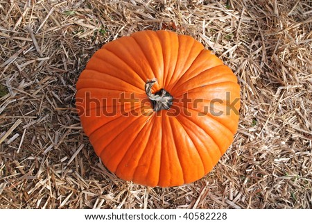 A top view of an almost perfectly round, ripe, orange pumpkin on a bed of straw. - stock photo