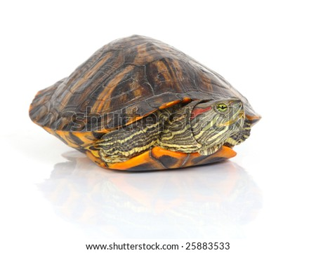 a tortoise coming out of his shell