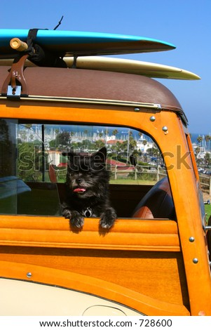 A Toto-like dog in a woody station wagon with surfboards on top in Santa Barbara, California.