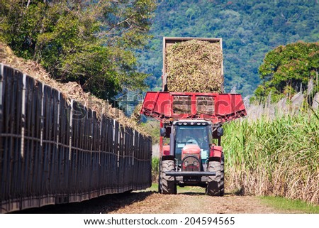 A tractor is loading newly harvested sugar cane onto a cane train in North Queensland, Australia.