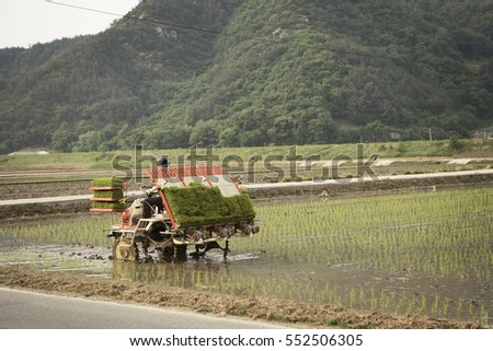 a tractor on the rice farm