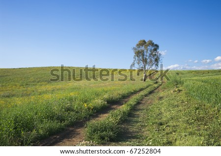 a tractor track crosses grassy field leading to an eucalyptus tree under a clean sky - stock photo