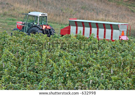 A tractor with hopper in a vineyard. Focus = tractor. 12MP camera. - stock photo