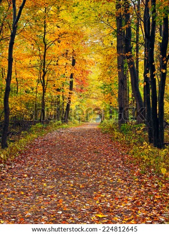 A trail covered with fallen autumn leaves is lined with trees displaying colorful fall foliage at Cuyahoga Valley National Park, Ohio. - stock photo