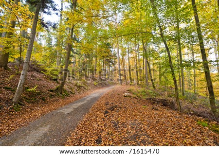 A trail in the autumn forest