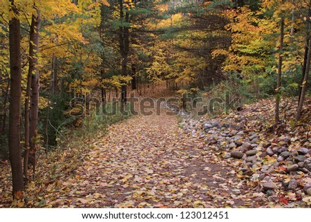 A trail in the woods decorated with the yellow leaves of Autumn.