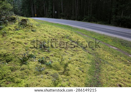A trail running beside the road on Gabriola Island, just off Vancouver Island, in British Columbia, Canada.  - stock photo