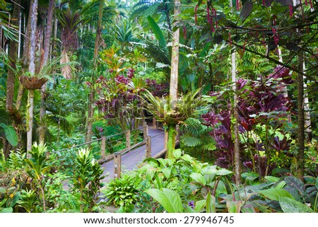 A trail through a beautiful exotic tropical foliage in Hawaii - stock photo