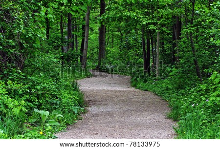 a trail through a Ontario forest in spring - stock photo
