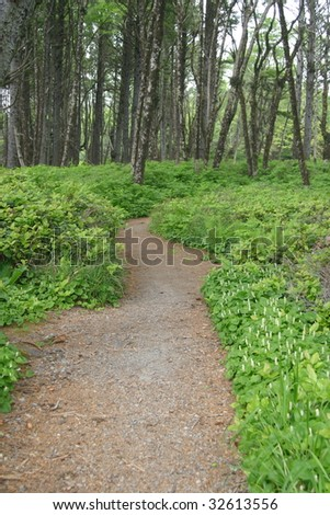 A trail winding through the Washington forest near the coast. - stock photo