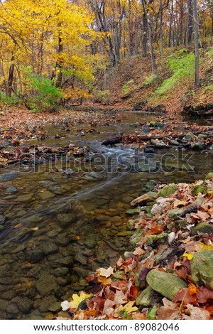 a tranquil stream meanders through the woodland. a forest preserve near Chicago, cook county Illinois awakens in autumn colors carrying fallen leaves downstream. - stock photo